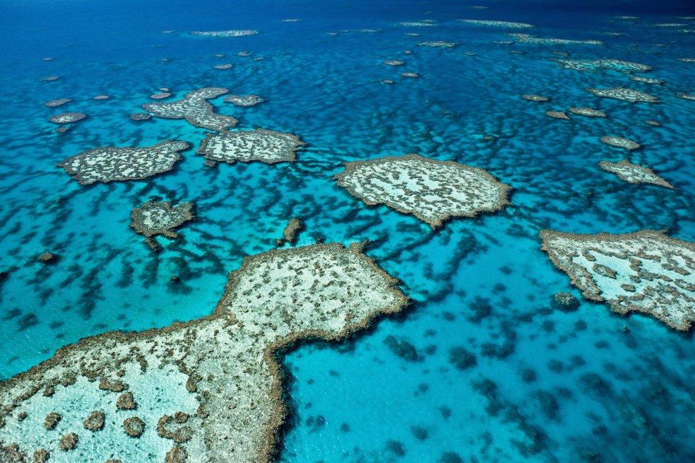 Día Mundial de los Océanos, en imágenes